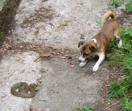 Alfie and the Snake