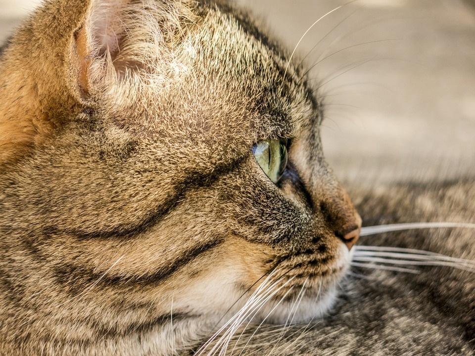Ginger catcat-181608_960_720