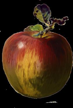 apple front cover transparent
